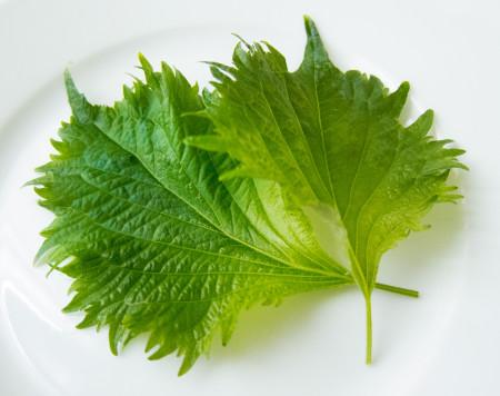 Shiso leaves